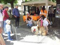 cani in adozione