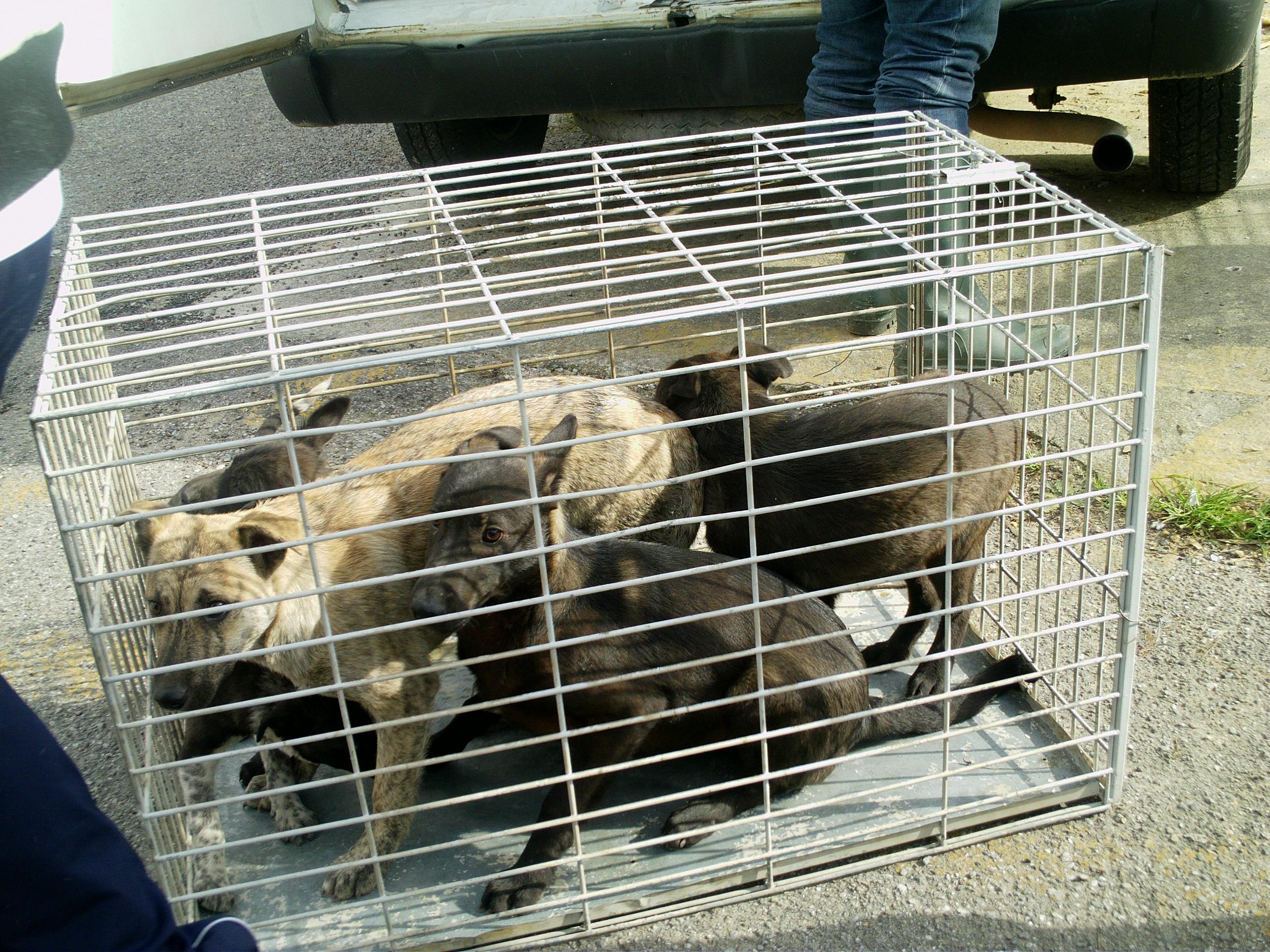 cani serra spiga