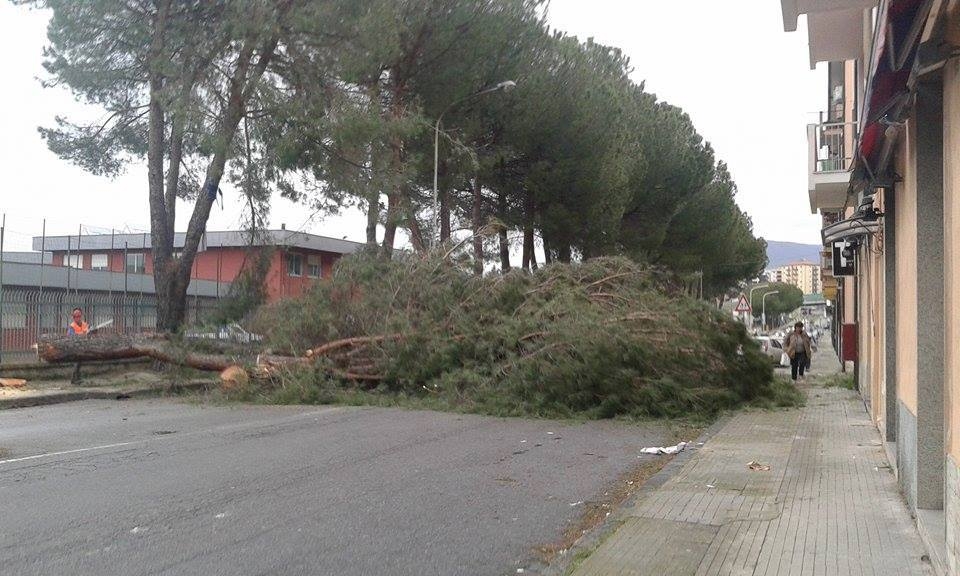 albero caduto via degli stadi