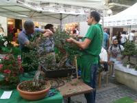 mostra bonsai