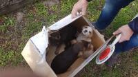 salvataggio cagnolini